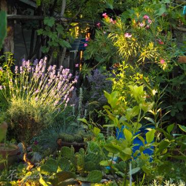 Jedna draga bašta